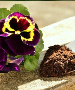 Ingrasaminte Profesionale pentru Flori si Plante ornamentale
